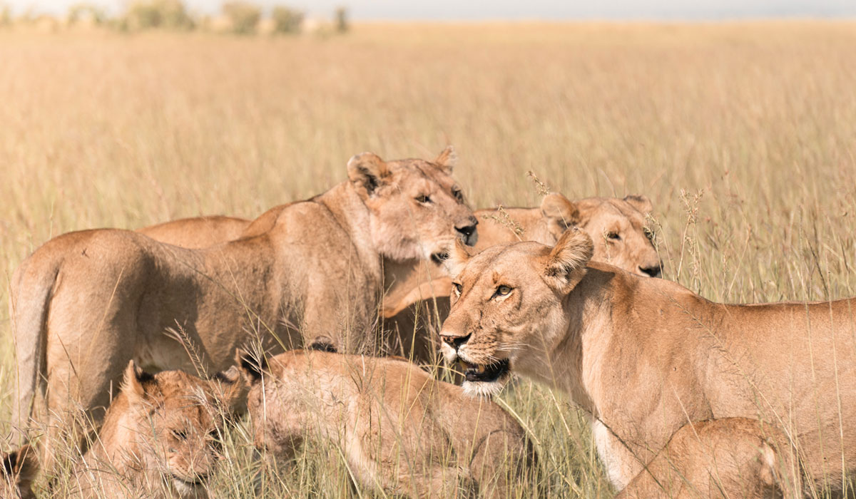 8 Days Kenya Safari Tour